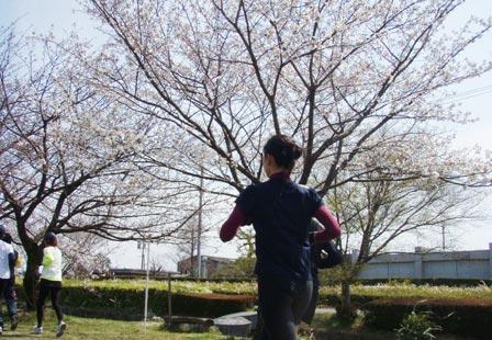 anjou_hyoushi.jpg
