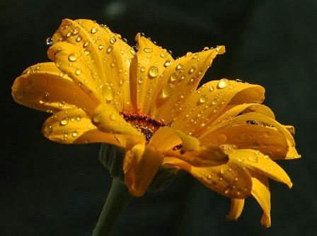 flowerrain.jpg