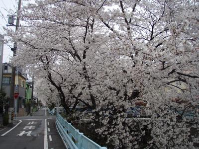 yamazakigawa.jpg