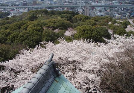komaki_hyoushi.jpg