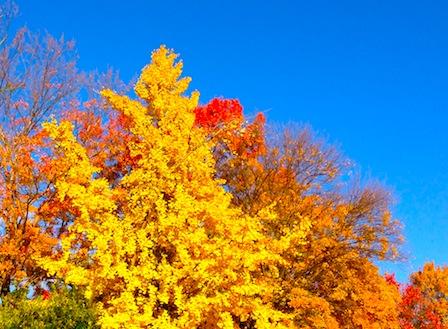 2012-11-27 08.37.43.jpg