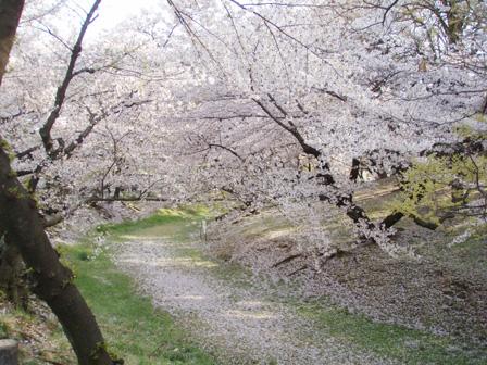 hanami004.jpg