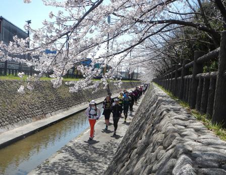 hanami2012_009.jpg