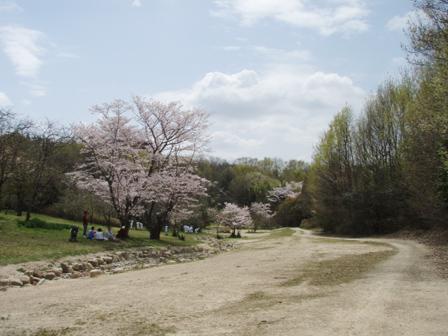 sakura_kinoshita.jpg