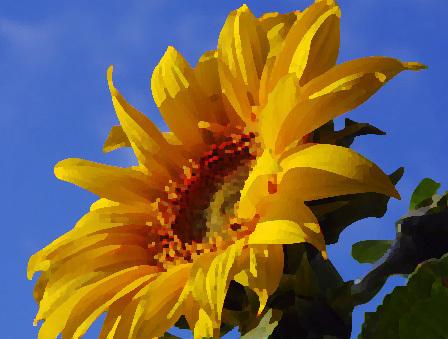 sun0001.jpg
